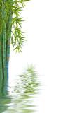 reflets de bambou, fond blanc