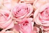 Big pink roses - 164395683