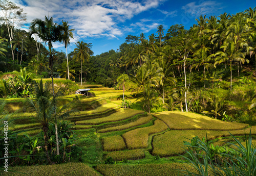 Keuken foto achterwand Rijstvelden Tegallalang rice fields. Ubud - Bali - Indonesia