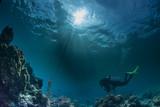 Podwodne krajobrazy morskie