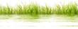herbes, composition aquatique