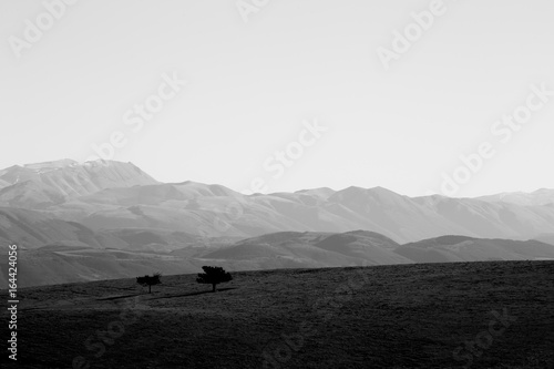 A minimalist photo of two isolated small trees on a mountain top, with some distant mountains in the background and an empty sky - 164424056