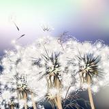 Elegant background with dandelions. Summer