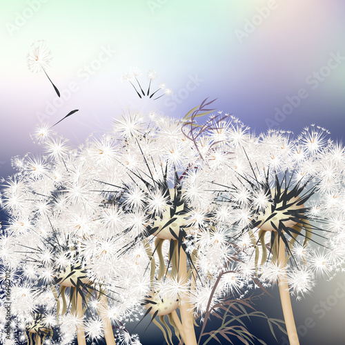 Elegant background with dandelions. Summer - 164427012