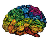 Fototapety Brain Idea illustration. Doodle vector concept about human brain. Creative illustration with colored brain and grey matter