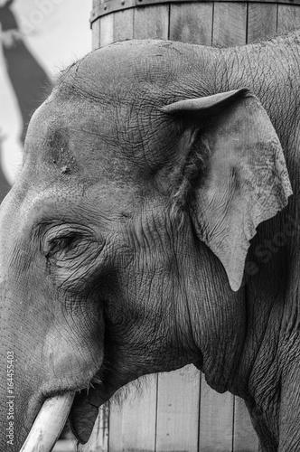 Alter Elefant © Luten