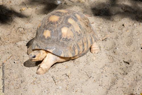 Fotobehang Schildpad Tortue terrestre