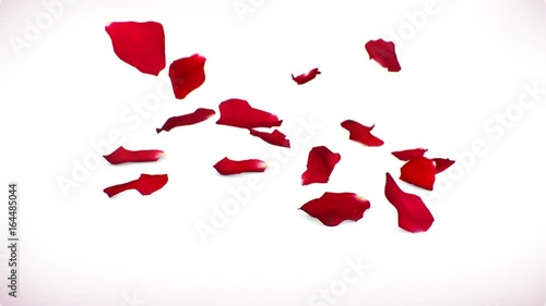 Slow Motion Rose Petals Background