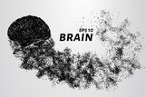 The brain of the particles. The brain is composed of circles and dots. Vector illustration.