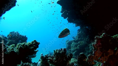 Life in underwater cave - Abu Dabab, Marsa Alam, Red Sea, Egypt, Africa