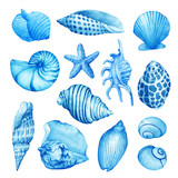 Set, composition of underwater life objects - blue sea shells. Illustrations of marine design. Hand drawn watercolor painting on white background. - 164509033