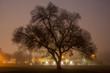 Tree in fog at night