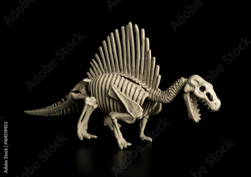 spinosaurus skeleton on a black background Poster