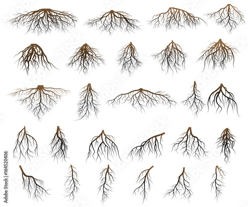 Set of tree roots - 164520406