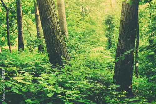 Green forest in summer. Nature landscape.