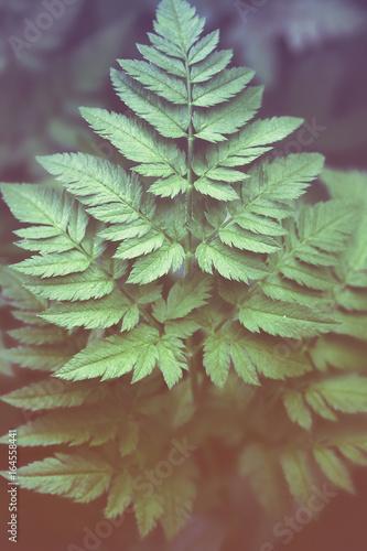 fern leaf full screen - 164558441