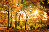 Invitation to dream, silence, relation, timeout, happiness: wonderful day in autumn forest :) - 164565222