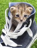 Cat szczenięta wewnątrz buta