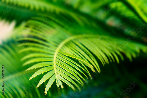 tropical palm leaves close up - botanical backgrounds