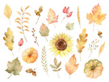 Watercolor autumn set of leaves, branches, flowers and pumpkins isolated on white background. - 164581240