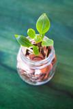 Pianta cresce nei soldi risparmiati, economia, pianeta