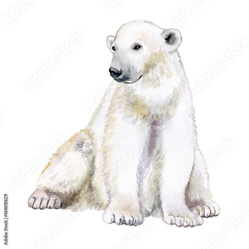 Polar bear. Watercolor illustration isolated on white background. Watercolor illustration, sketch animal. Cute wild bear. - 164618629