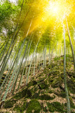 Bamboo forest in Yixing,Jiangsu,China.