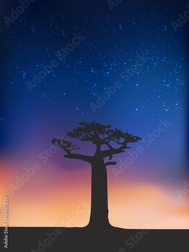 Africa, Sunset, Baobab