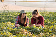 Two beautiful and young farmer girls examining crop of soy bean in fields during summer