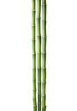 Three branches  of  Bamboo isolated on white background.  Sander's Dracaena - 164678248