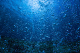 Rising Bubbles in Deep Underwater - 164683807