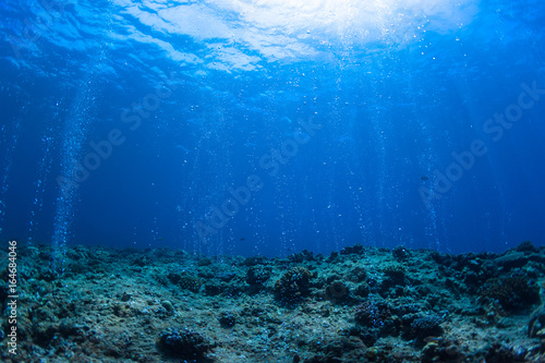 Tuinposter Koraalriffen Rising Bubbles from Reef - Deep Depth