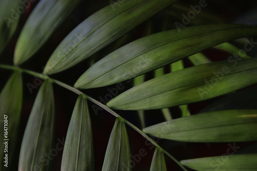image of tropical leaves dark floral background