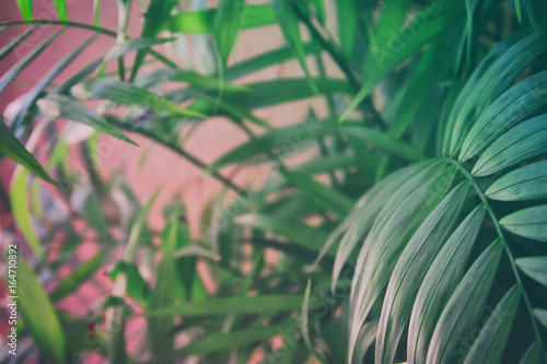 Tropical leaves on pastel pink background. floral background - 164710892