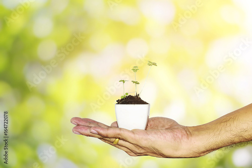 Young plant in a white ceramic pot in hand with beautiful green nature background, with clipping path-Used for home decoration.