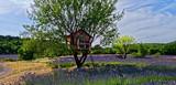 Cabane dans arbre - 164722663