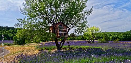Poster Lavendel Cabane dans arbre