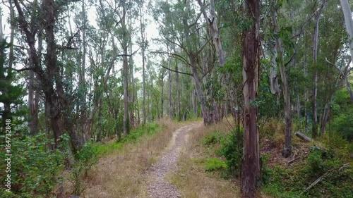 Path Through Eucalyptus Trees