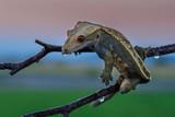 Portrait of Gecko on a rock