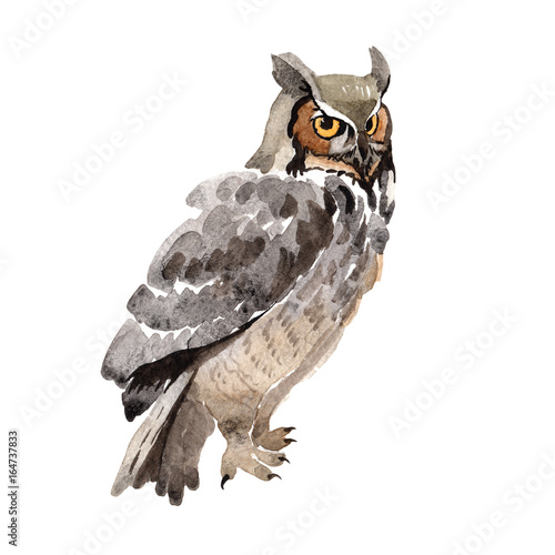 Sky bird owl in a wildlife by watercolor style isolated. Wild freedom, bird with a flying wings. Aquarelle bird for background, texture, pattern, frame, border or tattoo. - 164737833