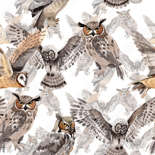 Sky bird owl pattern in a wildlife by watercolor style. Wild freedom, bird with a flying wings. Aquarelle bird for background, texture, pattern, frame, border or tattoo. - 164738016