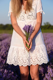 Beautiful young woman, holding lavender in lavender field - 164754285