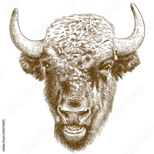 engraving antique illustration of bison head - 164758693