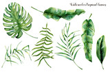 Watercolor set with tropical leaves. Hand painted palm branch, fern and leaf of magnolia. Tropic plant isolated on white background. Botanical illustration. For design, print or background - 164763414