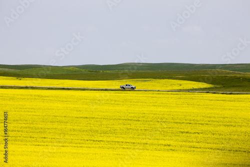 Spoed canvasdoek 2cm dik Oranje Canola Field Saskatchewan