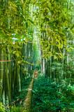 Bambouseraie.