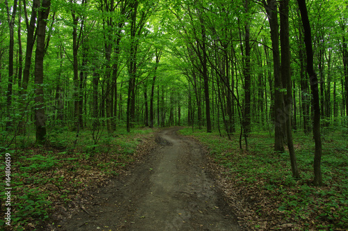 Trees in green forest - 164806059