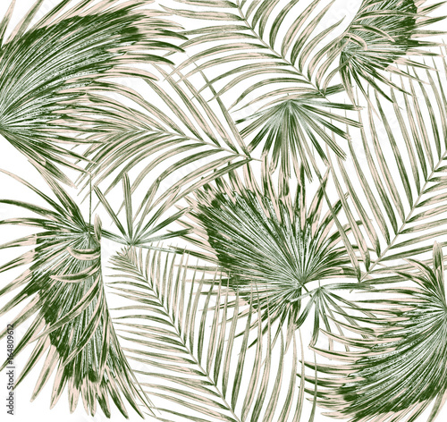 green leaf of palm tree on white background Poster