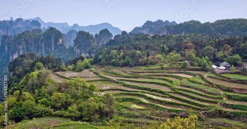 Foto op Plexiglas Rijstvelden Terraced rice fields in Zhangjiajie National Forest Park, Hunan Province of China