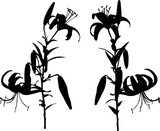 large black lilies two silhouettes on white